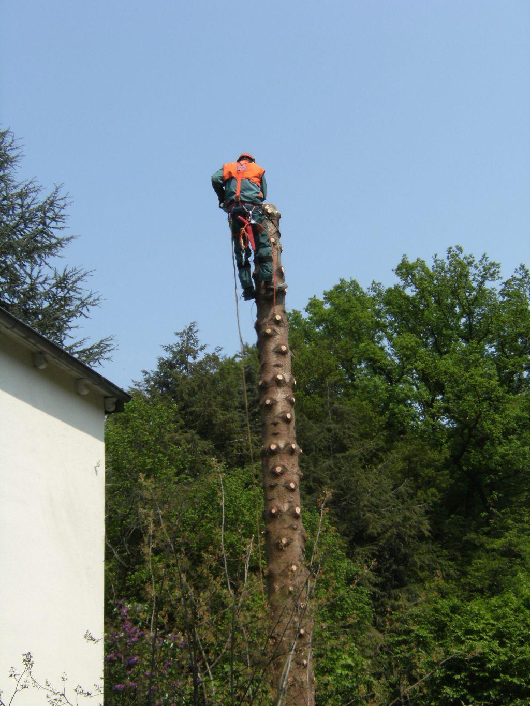 Baum nah am Haus sicher fällen - abtragen