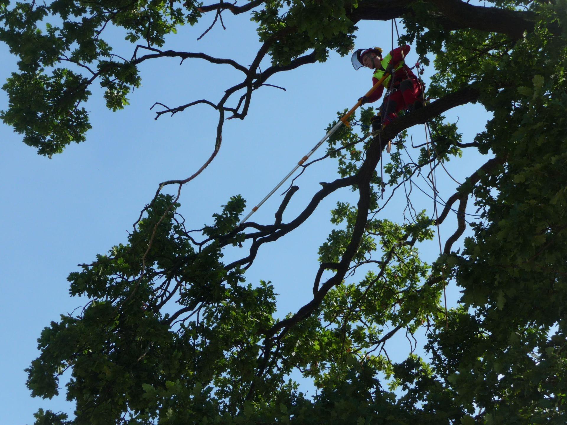 Baum schneiden mit Seilkletterer